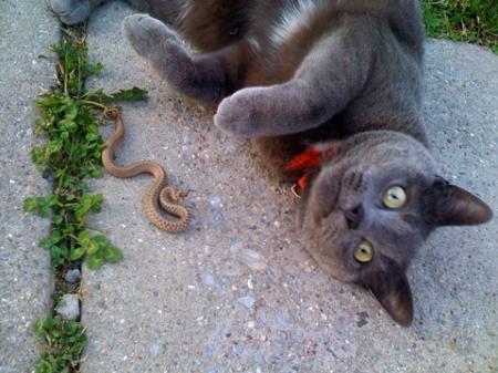 snake_21